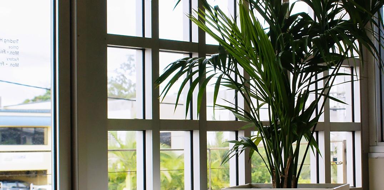 Boost productivity - Indoor Plant Hire Brisbane - Prestigious Plantscapes
