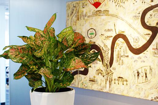 Indoor Plants Brisbane beside a painting