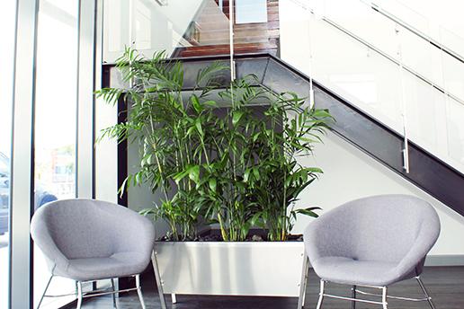 Green Leaf Indoor Plants Brisbane