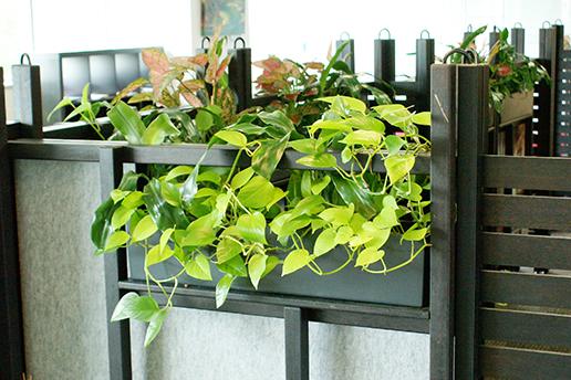 Hanging Indoor Plants Brisbane