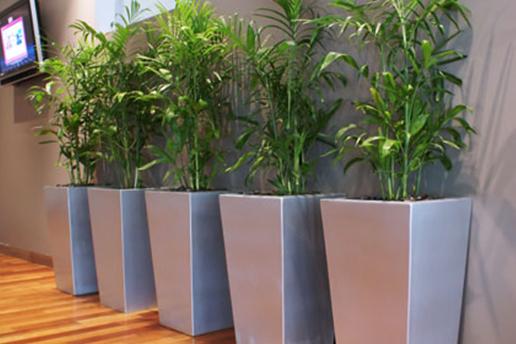 Potted Indoor Plants Brisbane