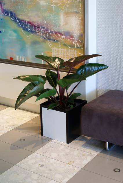 Small commercial indoor plant