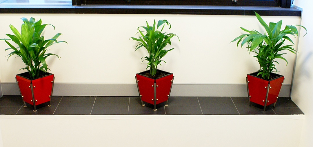 Three small indoor plants