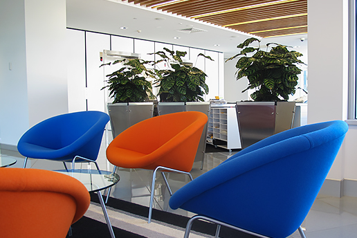 Chairs next to office plants