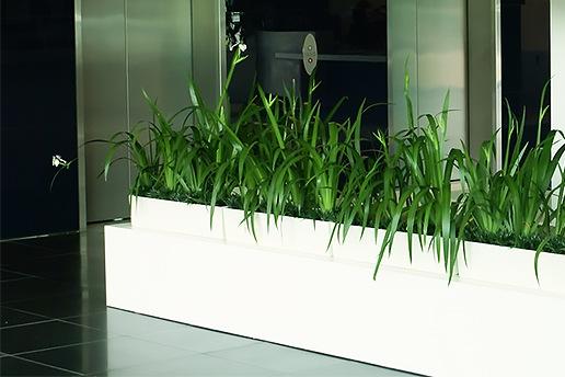 Indoor Plant Hire Brisbane - Prestigious Plantscapes