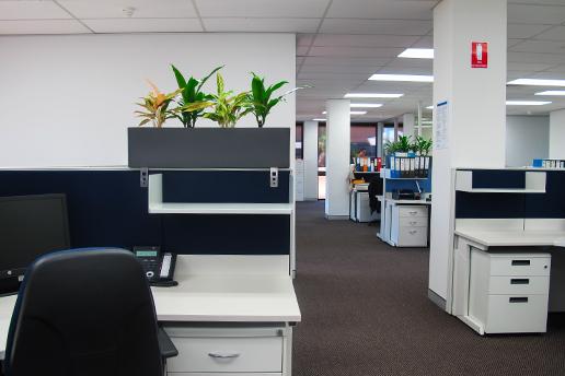 Indoor office plants on desk