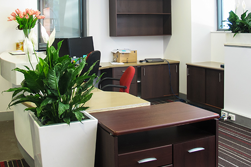 Three simple indoor plants around a desk area