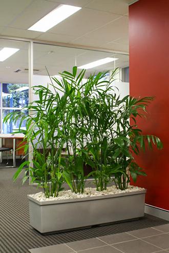 Plantscape in an office