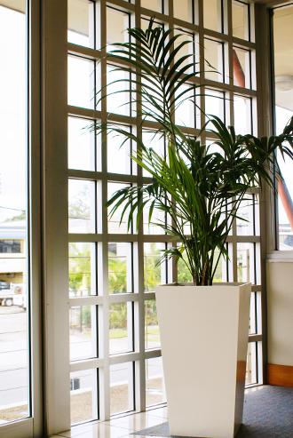 Elegant plant next to window