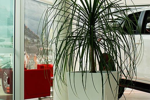 Business Impression - Indoor Plant Hire Brisbane - Prestigious Plantscapes