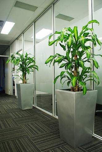 Business Impression - Office Plant Hire Services - Prestigious Plantscapes