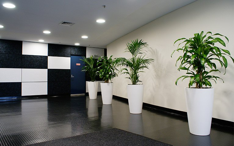 why-plants