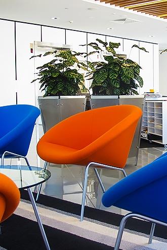 Indoor Plant Hire - Prestigious Plantscapes