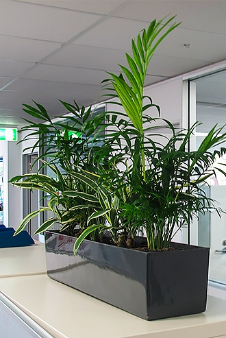 Plant on top of desk space